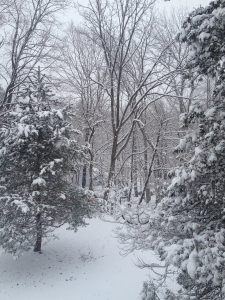 Photo of snow-covered Christmas tree in the woods